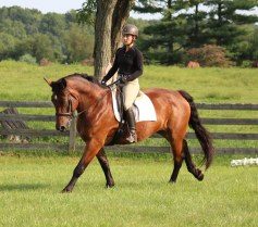 Topsy Canter